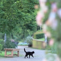 ~ 新緑の中の猫 ~