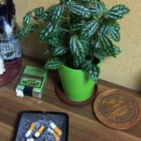 良さげな観葉植物。