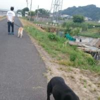 朝散歩に参加
