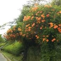 もう、夏の花が。