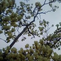 花と空 by 空倶楽部