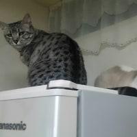 猫の予防接種副作用(翌朝)