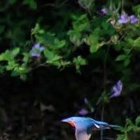 花・蝶・鳥 170429