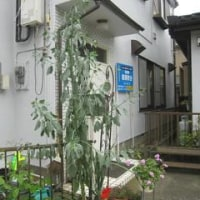 からし種の木
