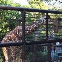 野毛山動物園 Le zoo Nogeyama