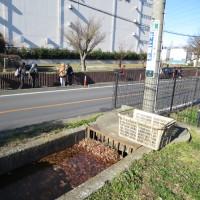 12月10日(土)玉川上水に親しむ会 240回例会-野火止用水を歩く②