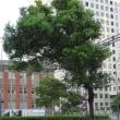 横浜市 妊娠から産後までの途切れのない支援の充実