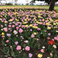 忙しい春。