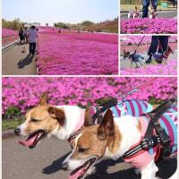 キレイだったピンク色〜♪♪
