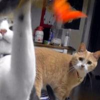暴風雨警報が出た日【猫日記こむぎ&だいず】2017.06.21
