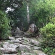 黒尊神社の大杉