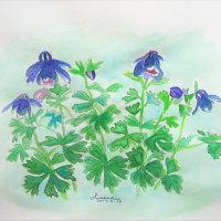 ♪青紫の苧環(オダマキ)の花が咲き出しました。~♪