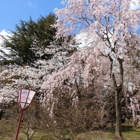 4月22日の弘前