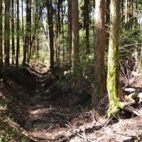 くじゅう 稲星山~南登山口、沢水登山口まで 4月24日