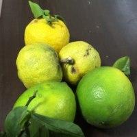 28.金/柑橘類🍊🍋