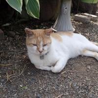 知り合いのこの猫のいる庭の植物を調べて見ました。