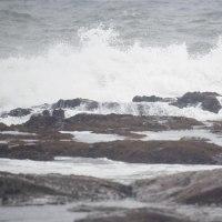 10/24探鳥記録写真(狩尾岬の鳥たち:イソヒヨドリ、ジョウビタキ、ウミウ、マガモの渡り)