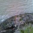 ウナギ釣りに行きました