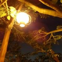 夜のスイスファミリー・ツリーハウス