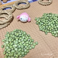 まずは、お豆の選別作業をしますよ〜なごみの森工房ー今日の手仕事