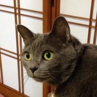 猫の日+1