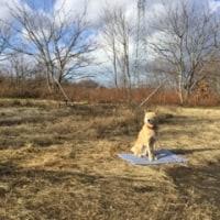 犬と日光浴