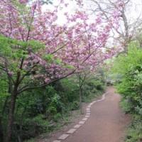 文殊山(60-45.276)&国吉城跡