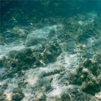 16年6月 今年も石垣島から波照間島へ その2〆