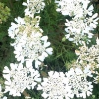 これ何の花だ?。