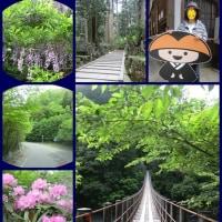 🍁 新緑を訪ねて🍂  高野龍神スカイライン 🚙💨