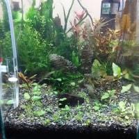 水草水槽3 CO2添加