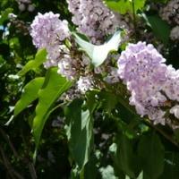 花(庭の花)