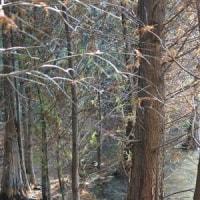 森林セラピー基地