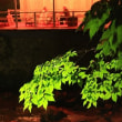 箕面の滝ライトアップ