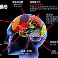 脳内麻薬(脳内物質)!
