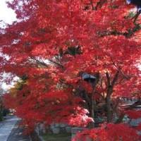 あれは三年前~真如堂から南禅寺への紅葉街道