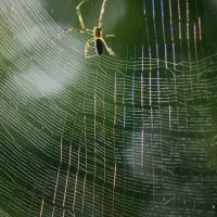 ~~~  雨上がりの蜘蛛の糸  ~~~