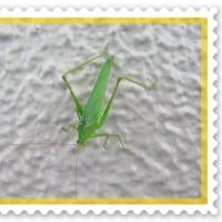私(昆虫)の名前は何でしょう?