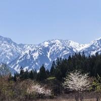 タイミング良く剱岳に桜が絡んだ ■2017_4_25