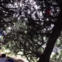 自主保育まんまる:遊ぼうランドで交流会からの夢見が崎動物公園