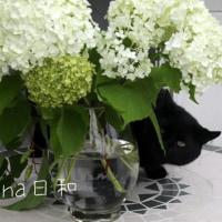 夢見る黒猫~ケット・シーとマタタビ~