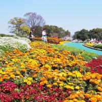 百年公園と高良川
