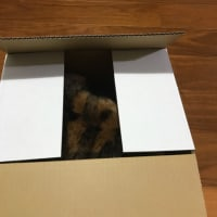 箱マジック