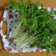 水菜の収穫・・