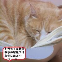下関市「長府庭園」⑤&クマ美味ちい水飲みたいでしゅ🐈