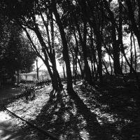 散歩写真  (Vol.1429)