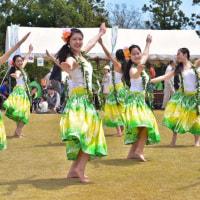 「高校生フラダンス」 いわき フラワーセンターにて撮影!