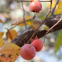木の実と小鳥たち