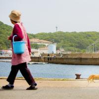 何気ない島の風景のようでいて、特別な風景 @相島のネコたち