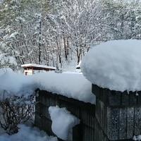 雪降りました~